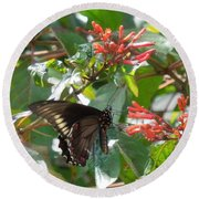 Round Beach Towel featuring the photograph Gold Rim Swallowtail by Ron Davidson