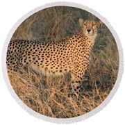 Golden Cheetah At Sunset Round Beach Towel