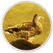 Golden Duck Round Beach Towel