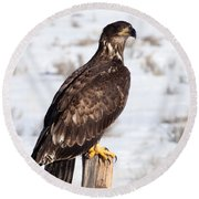 Golden Eagle On Fencepost Round Beach Towel by Nadja Rider