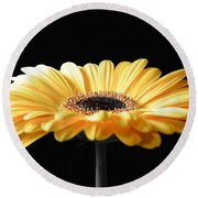 Golden Gerbera Daisy No 2 Round Beach Towel