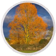 Golden Glow - Sunlit Tree Round Beach Towel