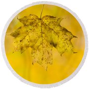Round Beach Towel featuring the photograph Golden Maple Leaf by Sebastian Musial
