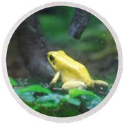 Golden Poison Frog Round Beach Towel by DejaVu Designs