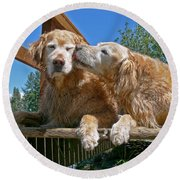 Golden Retriever Dogs The Kiss Round Beach Towel