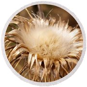 Golden Thistle Round Beach Towel