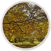 Golden Walnut Orchard Round Beach Towel