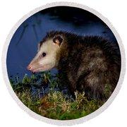 Round Beach Towel featuring the photograph Good Night Possum by Olga Hamilton