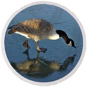 Goose On Ice Round Beach Towel
