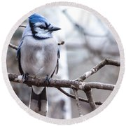 Gorgeous Blue Jay Round Beach Towel