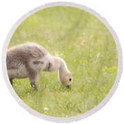 Gosling Round Beach Towel by Jeannette Hunt