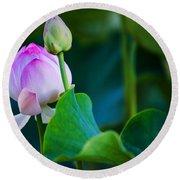 Graceful Lotus. Pamplemousses Botanical Garden. Mauritius Round Beach Towel