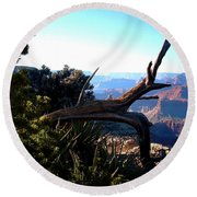 Round Beach Towel featuring the photograph Grand Canyon Dead Tree by Matt Harang