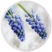 Grape Hyacinth Round Beach Towel by Nailia Schwarz
