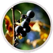 Grapes On The Vine No.2 Round Beach Towel