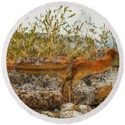 Grass Growing In Ancient Pot Round Beach Towel