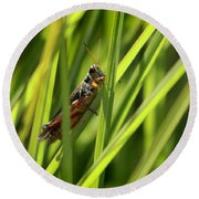 Grasshopper In Grass Round Beach Towel
