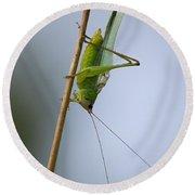 Grasshopper Round Beach Towel by Anne Rodkin