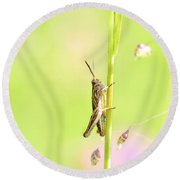 Grasshopper  Round Beach Towel by Tommytechno Sweden