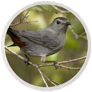 Round Beach Towel featuring the photograph Gray Catbird by Meg Rousher