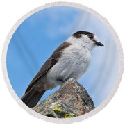 Gray Jay With Blue Sky Background Round Beach Towel