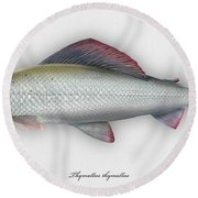 Grayling - Thymallus Thymallus - Ombre Commun - Harjus - Flyfishing - Trout Waters - Trout Creek Round Beach Towel