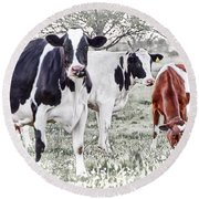 Busy Bovines Round Beach Towel