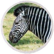 Grazing Zebra Round Beach Towel