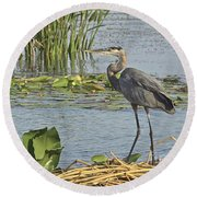 Round Beach Towel featuring the photograph Great Blue Heron by Carol  Bradley