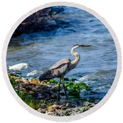 Great Blue Heron And Snowy Egret At Dinner Time Round Beach Towel by Debra Martz