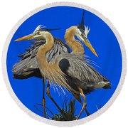 Great Blue Heron Family Round Beach Towel