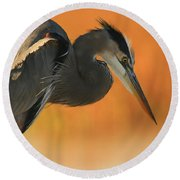 Great Blue Heron Focus Round Beach Towel