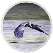 Great Blue Heron In Flight Round Beach Towel by John Haldane