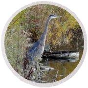 Great Blue Heron - Juvenile Round Beach Towel
