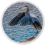 Great Blue Heron Pose Round Beach Towel