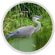 Great Blue Heron  Round Beach Towel by Susan Garren