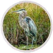 Great Blue Heron Waiting For Supper Round Beach Towel