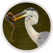 Great Blue Heron With Stingray Round Beach Towel