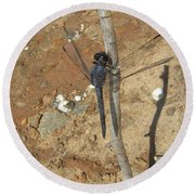 Slaty Skimmer Dragonfly Shadow Round Beach Towel by Donna Brown