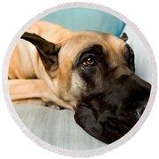 Great Dane Dog On Sofa Round Beach Towel