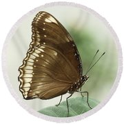 Great Eggfly Butterfly Round Beach Towel by Judy Whitton