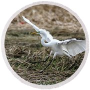Round Beach Towel featuring the photograph Great Egret Landing by William Selander