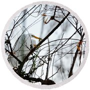 Round Beach Towel featuring the photograph Great Egret Roosting In Winter by Susan Wiedmann