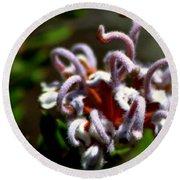 Great Spider Flower Round Beach Towel by Miroslava Jurcik