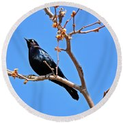 Great-tailed Grackle On A Sunny Spring Day Round Beach Towel by Susan Wiedmann