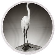 Great White Egret On Hippo Round Beach Towel by Johan Swanepoel