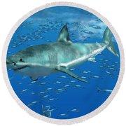 Great White Shark Round Beach Towel