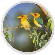 Green And Gold - Yellow-billed Kingfishers Round Beach Towel