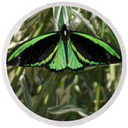 Round Beach Towel featuring the photograph Green Butterfly by Brenda Brown