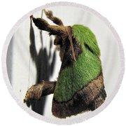 Green Hair Moth Round Beach Towel